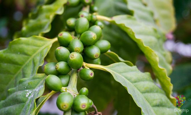 Café de colombia, el mejor café del mundo!