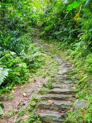 Escaleras en piedra en la Sierra nevada de Santa Marta