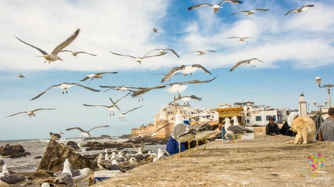 Fotografía de viajes, Essaouira Marruecos en vidéo