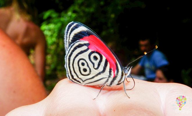 Mariposa 89, diversidad natural de Colombia