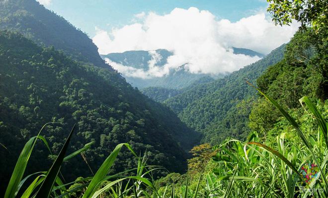 Viaje a la selva en la sierra neveda de Santa Marta