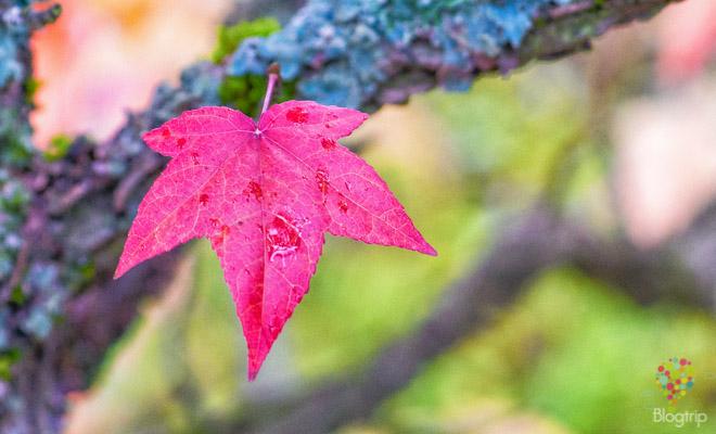 Colores de otoño en Francia (Europa)