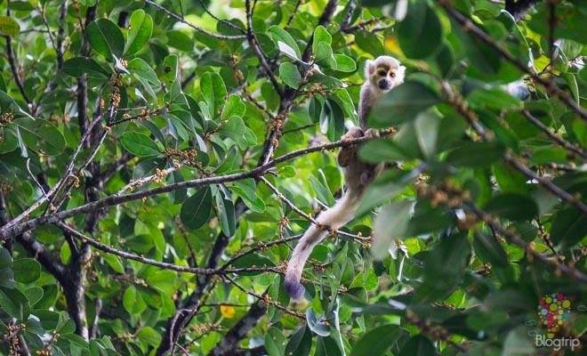 Mico o mono ardilla en el parque Los Ocarros Villavicencio