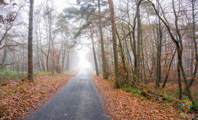 Paisaje de otoño en las montañas de Francia