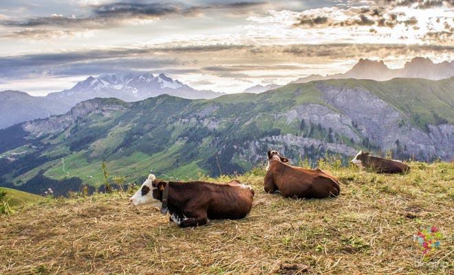 Paisaje panorámico de los Alpes Mont Blanc
