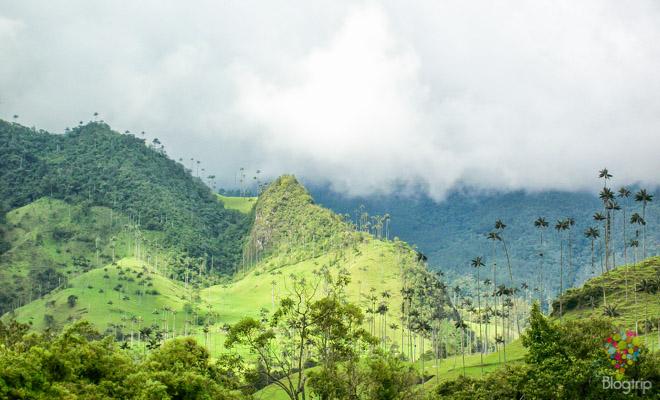 Parque de la palma cera, valle del cocora salento Quindío Colombia