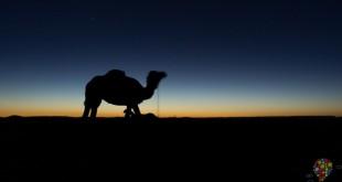 Desierto del Sahara: viajar a dormir bajo las estrellas en Marruecos