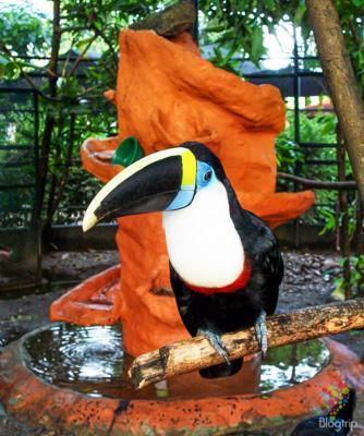 Tucán parque ecológico los Ocarros Villavicencio