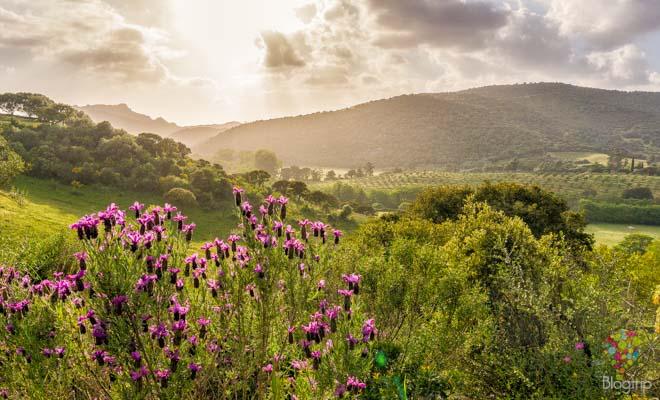 Fotografía del paisaje de primavera en la isla de Córcega