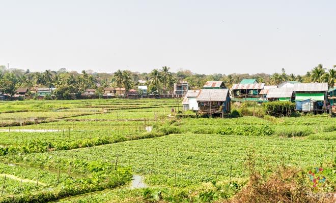 Paisaje de jardines flotantes, tren circular en Yangon Myanmar