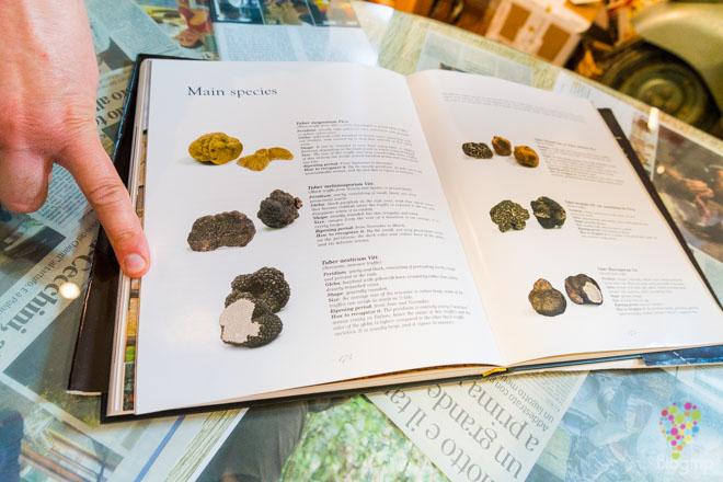 Conociendo la variedad de trufas en la casa Savini Tartufi en Palaia, La Valdera