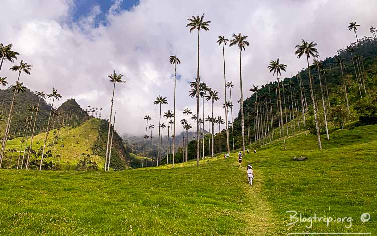 Valle de Cocora en Salento Quindío guía para viajar a Colombia